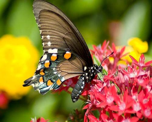 Botanica – The Wichita Gardens