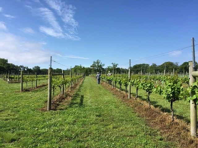 Willow Creek Winery