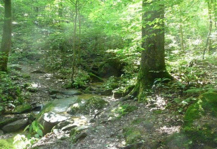 Kanawha State Forest