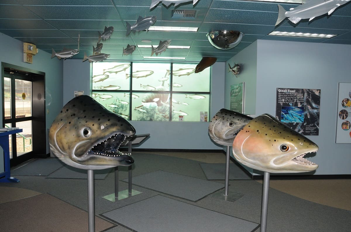 Nimbus Fish Hatchery