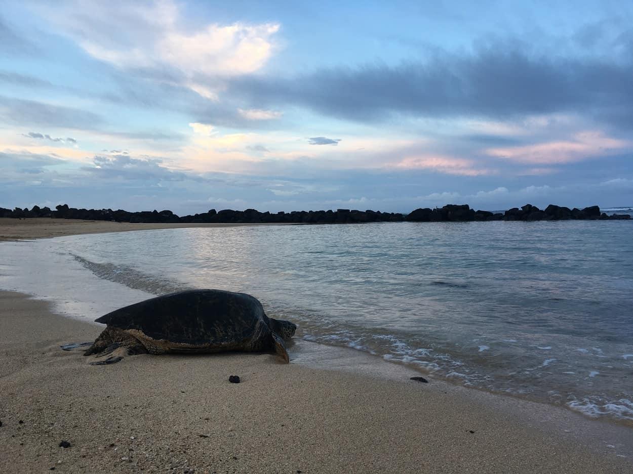 See the Turtles and Seals at Poipu Beach