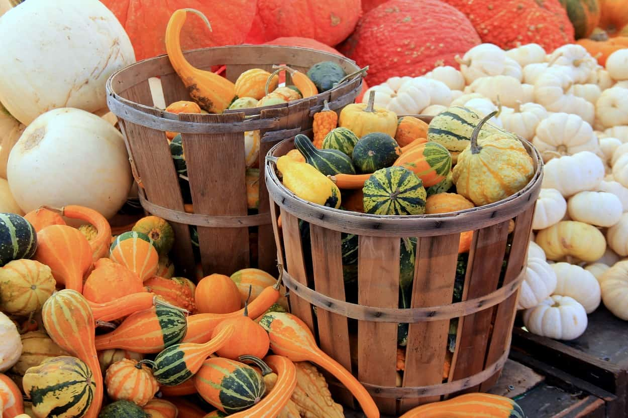 Visit the Local Farmers' Markets
