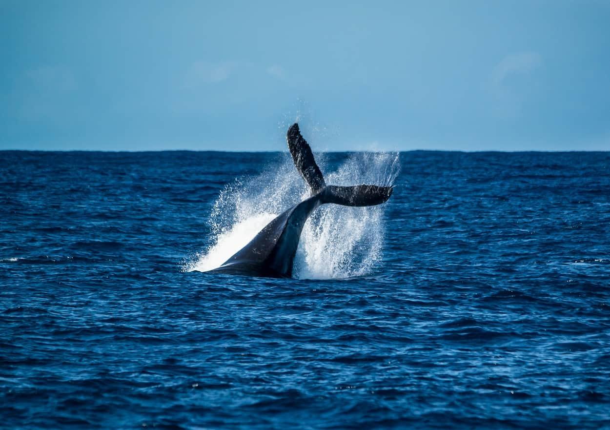 Take a Whale-Watching Boat Trip