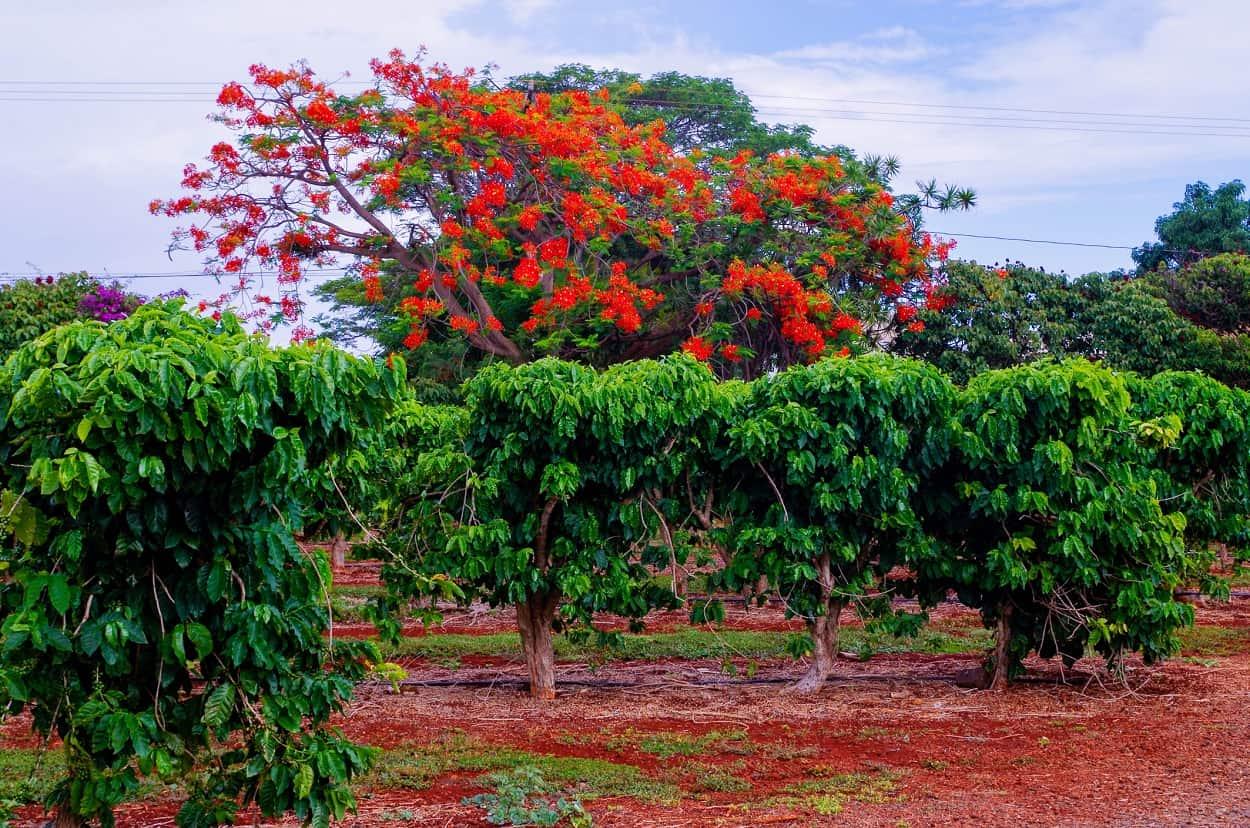 Visit a Coffee Plantation