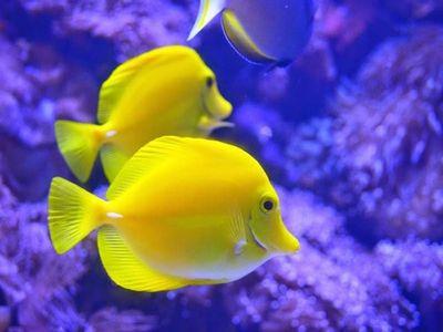 New England Aquarium, Boston, Massachusetts