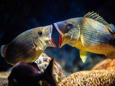 The Florida Aquarium, Tampa, Florida