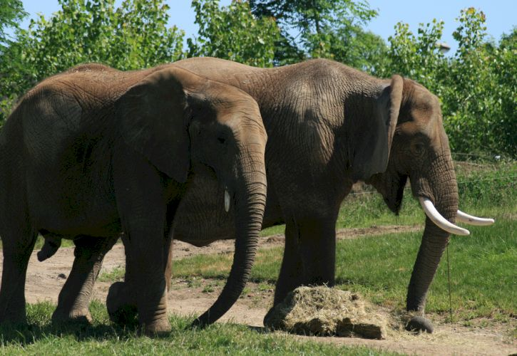 Indiana: Indianapolis Zoo