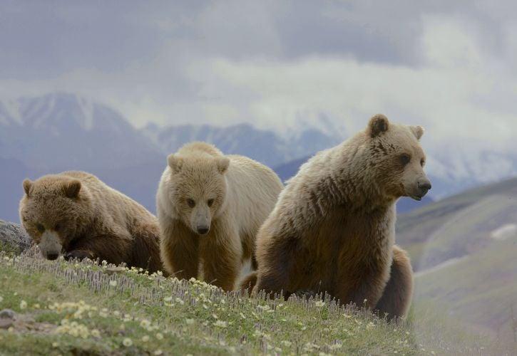 Denali National Park & Preserve, Alaska