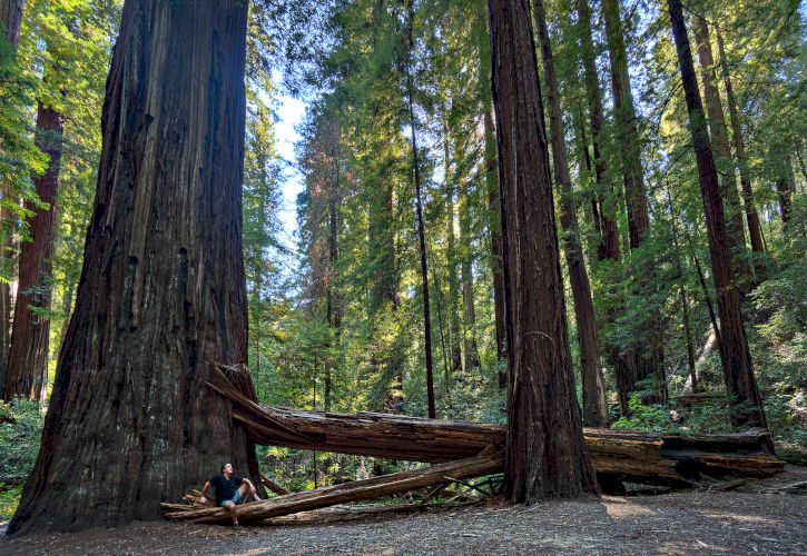 Sequoia & Kings Canyon National Parks, California