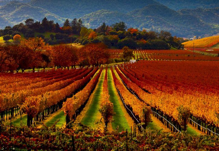 Napa and Sonoma Valleys, California