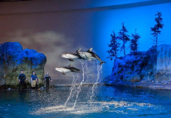 Shedd Aquarium, Chicago, Illinois