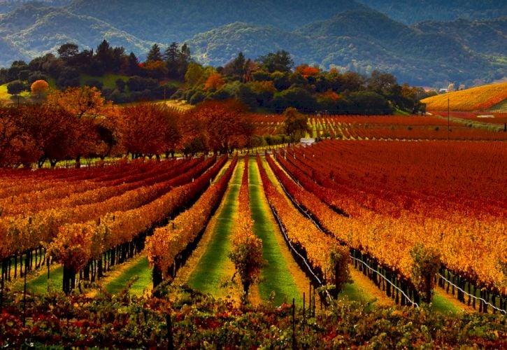 Biking through the wine country in Napa and Sonoma, California