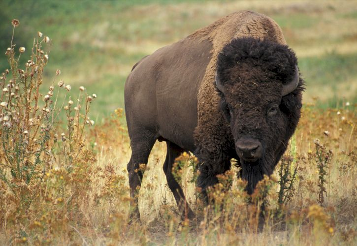 Yellowstone National Park, Wyoming and Montana