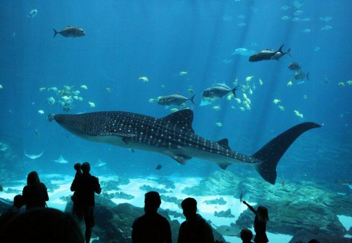 Seattle Aquarium, Washington