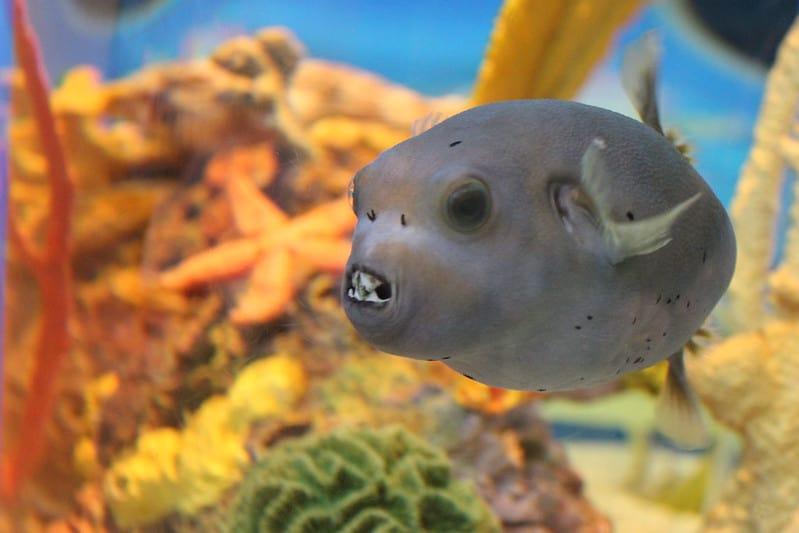 Ripley's Aquarium of the Smokies, Gatlinburg, Tennessee