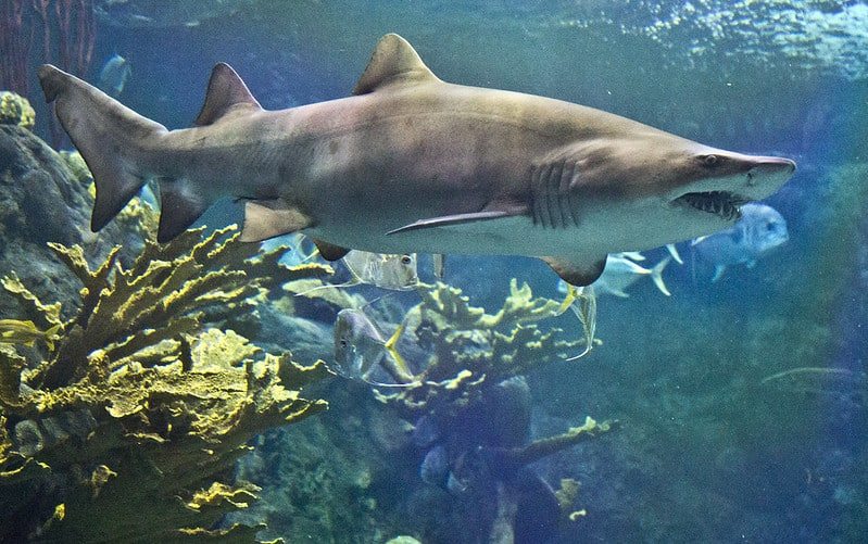 The Top 10 Best Aquariums in the USA | Attractions of America