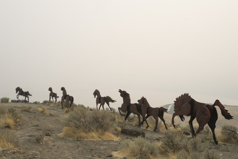 Grandfather Cuts Loose the Ponies – Quincy, Washington