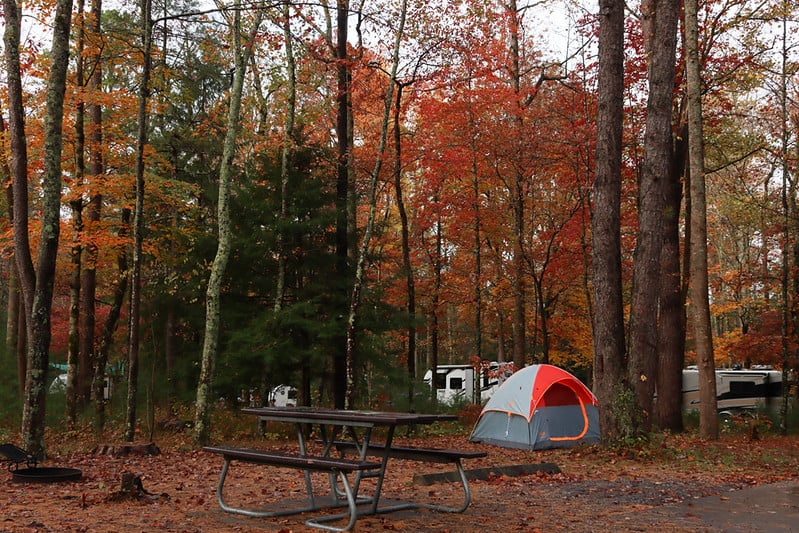 Go Camping at the Park