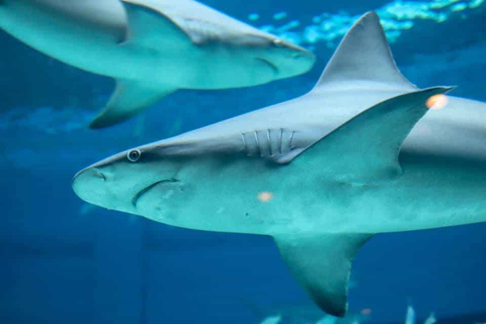 Texas State Aquarium, Corpus Christi, Texas