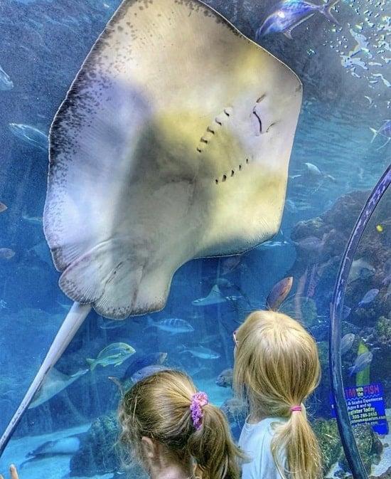 Downtown Aquarium, Denver, Colorado