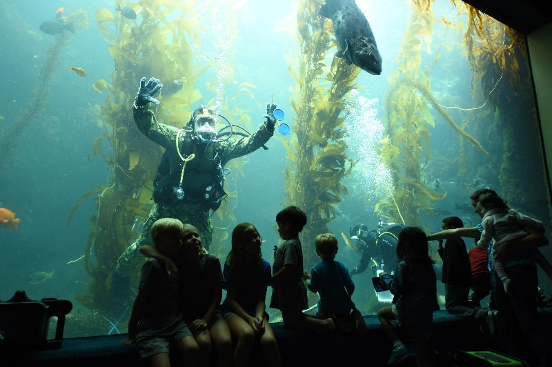 Birch Aquarium at Scripps, San Diego, California