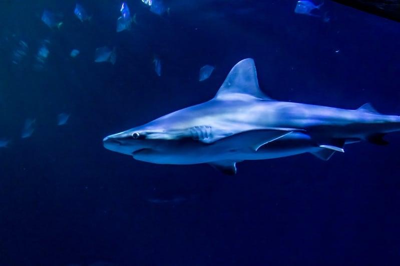 Shark Reef Aquarium at Mandalay Bay, Las Vegas, Nevada