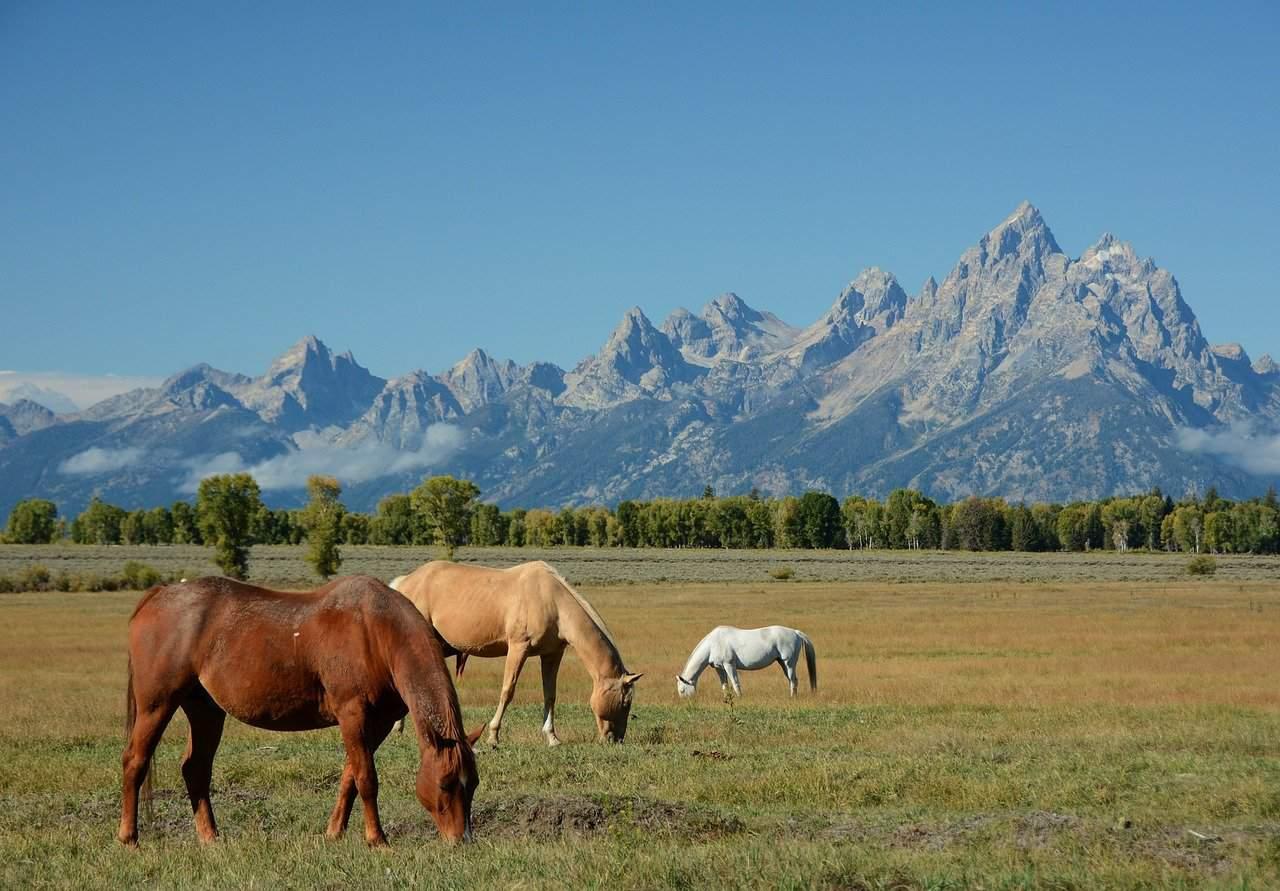 Grand Teton National Park & Jackson Hole, Wyoming