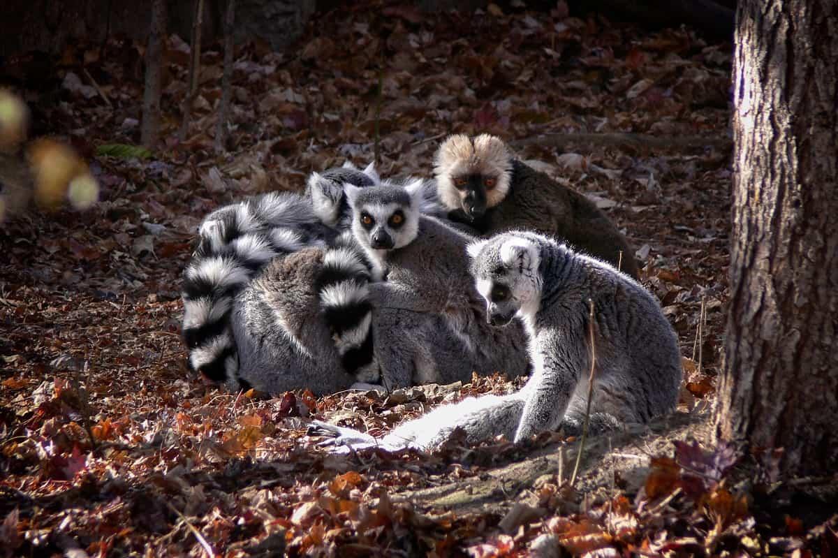 Denver Zoo, Denver, Colorado