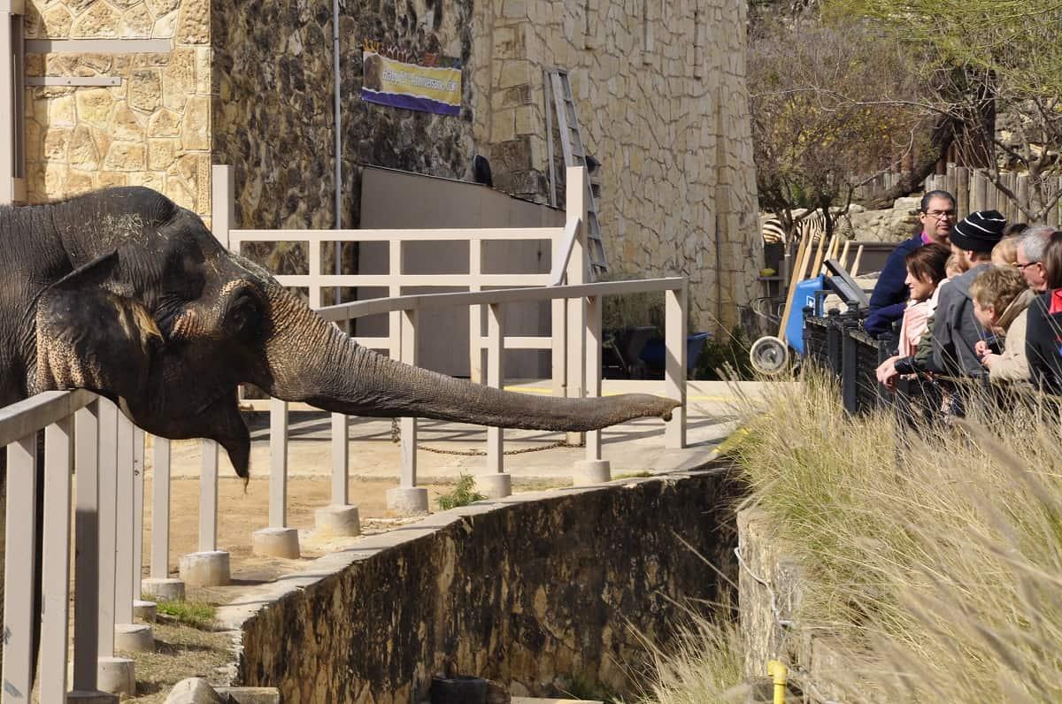 San Antonio Zoo, San Antonio, Texas