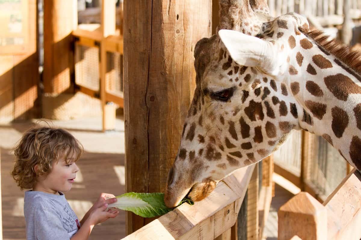 Dallas Zoo, Dallas, Texas