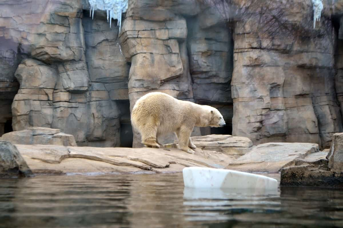 Kansas City Zoo, Kansas City, Missouri