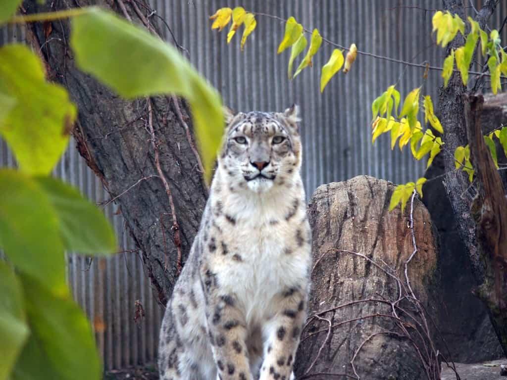 Saint Louis Zoo, St. Louis, Missouri