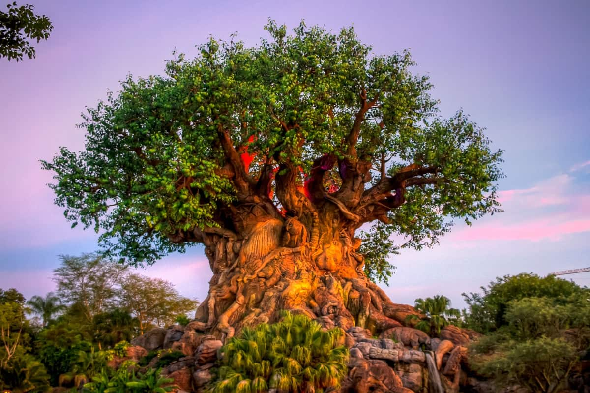 Disney's Animal Kingdom, Orlando, Florida
