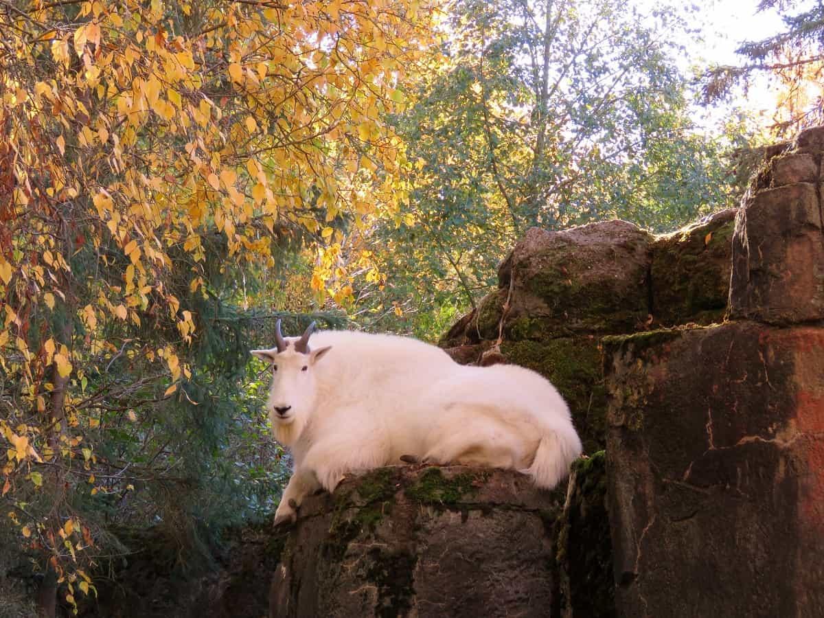 Woodland Park Zoo, Seattle, Washington