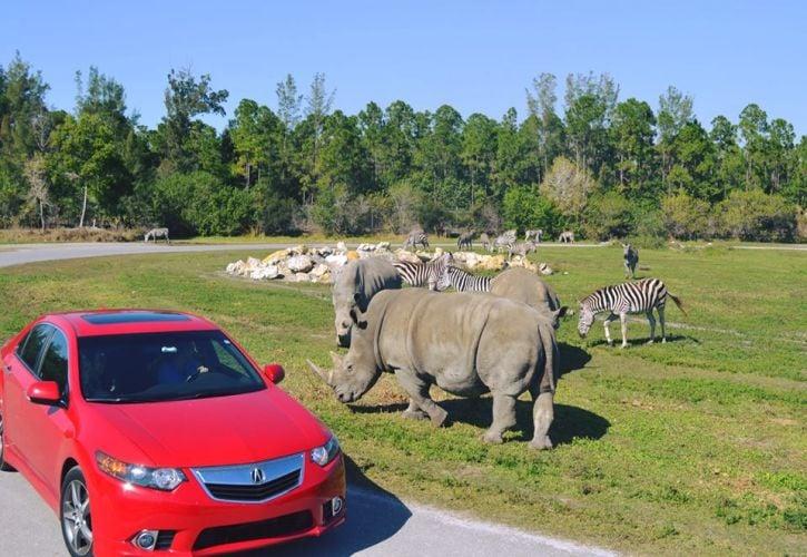 Lion Country Safari, Florida