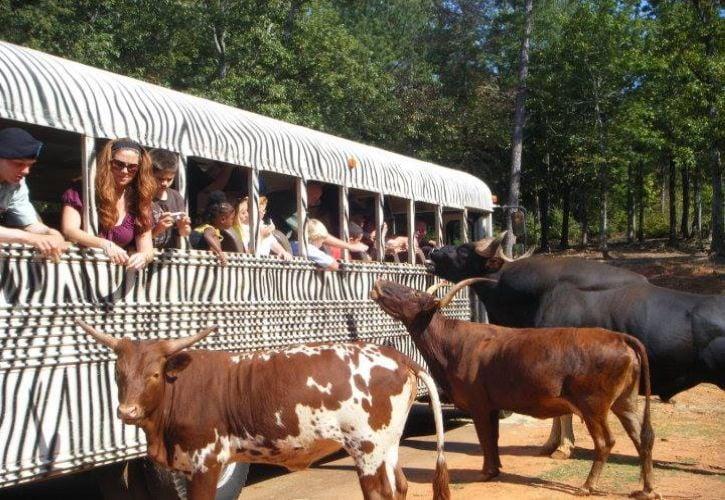 Pine Mountain Wild Animal Safari, Georgia
