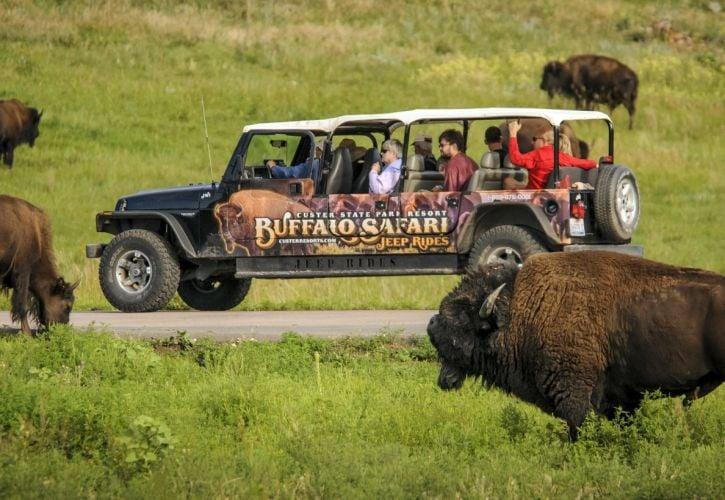 Buffalo Safari Jeep Tour, South Dakota
