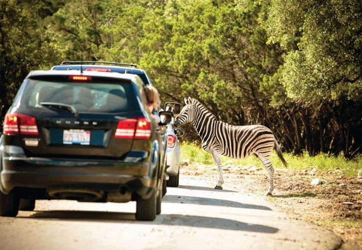 Natural Bridge Wildlife Ranch, Texas