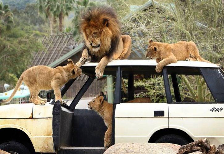 San Diego Zoo Safari Park, California