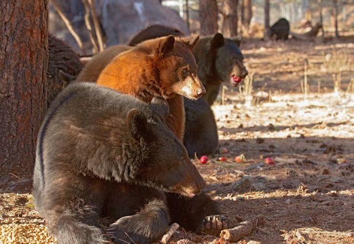 Bearizona Wildlife Park, Arizona