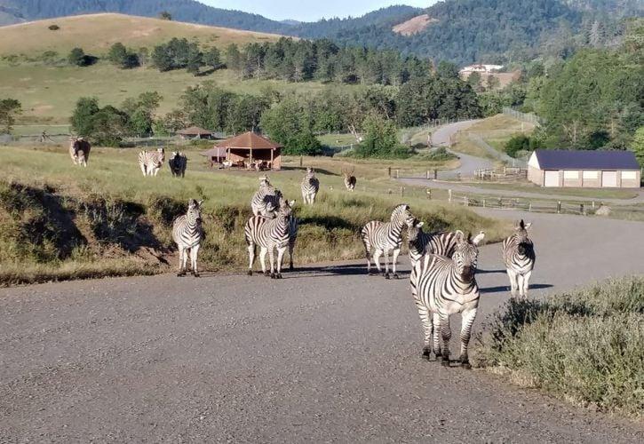 Wildlife Safari, Oregon