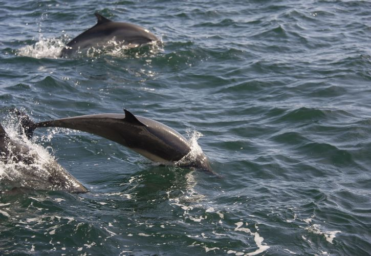 Channel Islands Whale Watching and Sea Kayaking