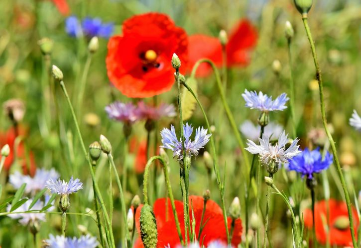 Wild Flowers in Spring and Summer