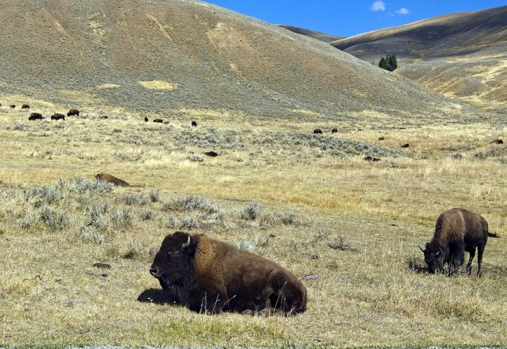 Don't forget Lamar Valley