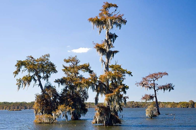 Cypress Island preserve
