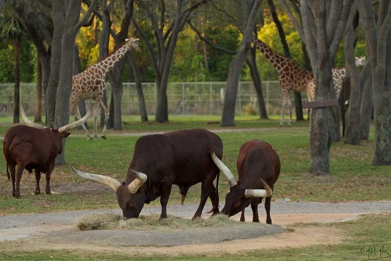Visit Disney's Animal Kingdom Lodge