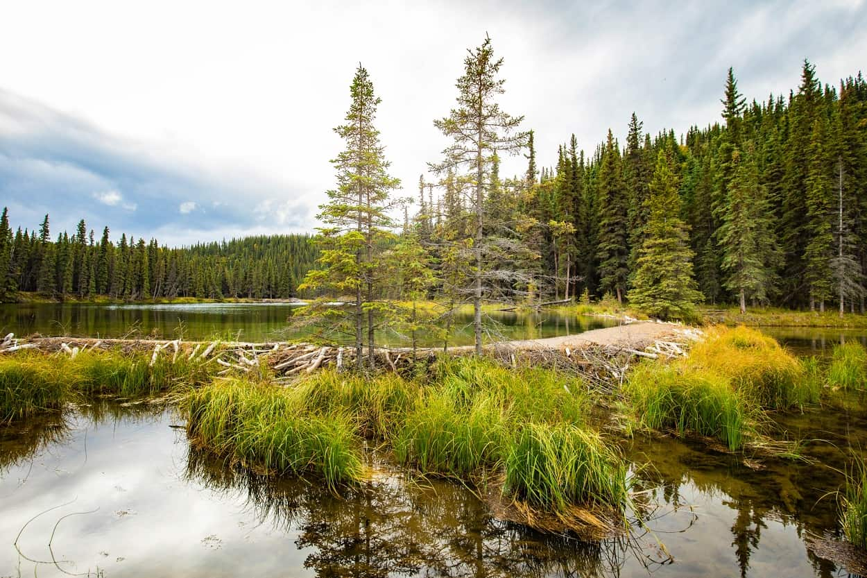 See The Beaver Dams