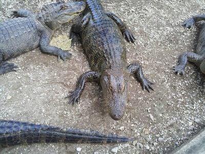 Arkansas Alligator Farm and Petting Zoo