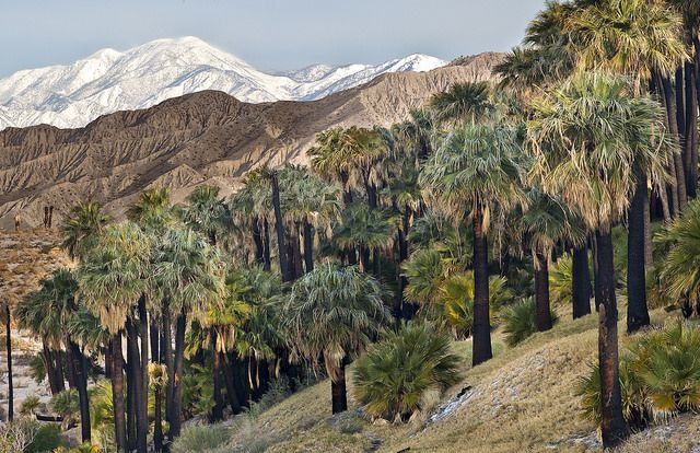 Top 10 Tourist Attractions in Palm Springs, California