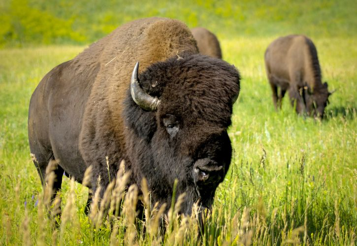 Top 5 Tourist Attractions in Custer, South Dakota